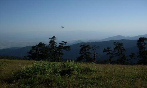 Zdjęcie GRUZJA / Park Narodowy Borżomi-Karaguli / północny-zachód od Atskuri (Atskuri w połowie drogi pomiędzy Borżomi a Akhaltsikhe) / mucha nie siada? Czy coś bardziej drapieżnego?