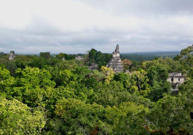 Zdjęcia: Tikal, panorama Tikal ze szczytu Temple V, GWATEMALA