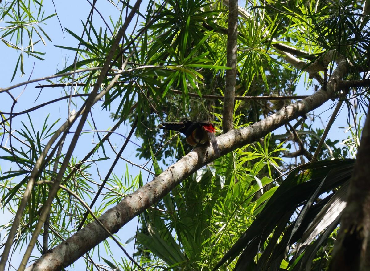 Zdjęcia: Tikal, Tikal, Mam orzeszka?, GWATEMALA