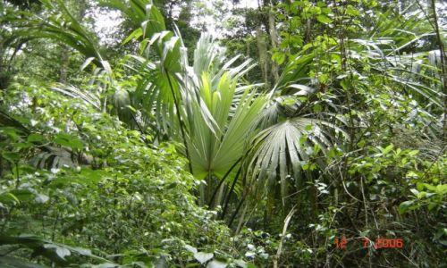 Zdjęcie GWATEMALA / Interior / Gwatemala / Przedsmak dżungli