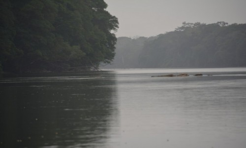 Zdjęcie GWINEA RÓWNIKOWA / Centro Sur / Park Narodowy Monte Alen / Rzeka Mbini