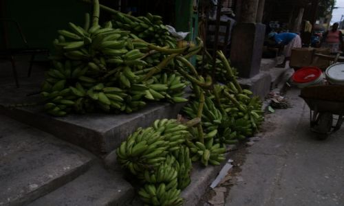 HAITI / brak / Port au Prince / Platan czyli banan warzywny