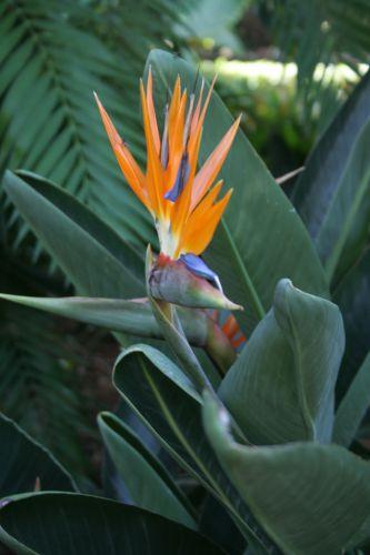 Zdjęcia: Teneryfa, Piękno przyrody, HISZPANIA