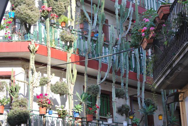 Zdjęcia: Calella, Katalonia, Kaktusy, HISZPANIA