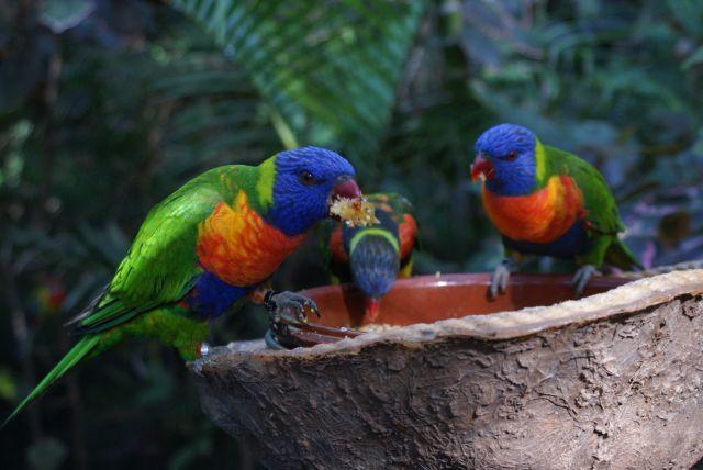 Zdjęcia: vivarium, Teneryfa, Papugi, HISZPANIA
