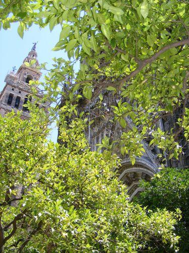 Zdj�cia: Sewilla, Andaluzja, Katedra, HISZPANIA