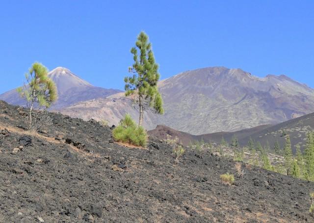 Zdjęcia: Teneryfa, Park Narodowy del Teide, Wyspy Kanaryjskie, Park Narodowy del Teide (3), HISZPANIA