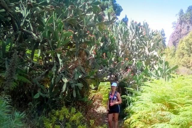 Zdjęcia: La Palma, Wyspy Kanaryjskie, Pod drzewiastą opuncją, HISZPANIA