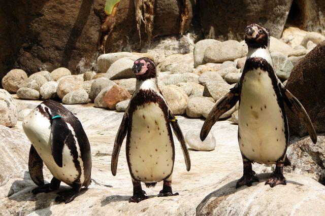 Zdjęcia: zoo, trio, HISZPANIA