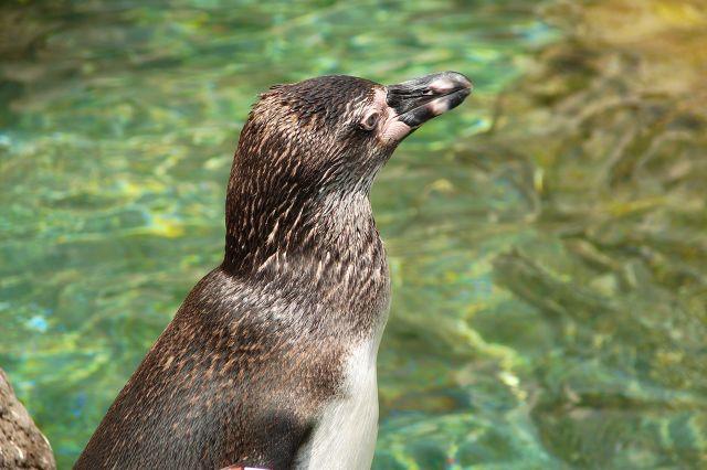 Zdjęcia: zoo, oko, HISZPANIA