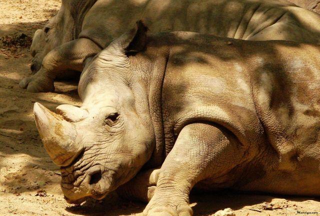 Zdjęcia: zoo, nosorozce, HISZPANIA
