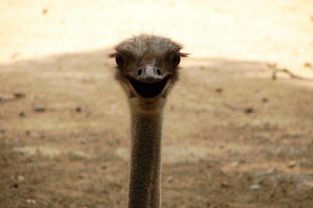 Zdjęcia: zoo, strus, HISZPANIA