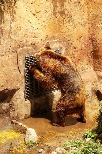 Zdjęcia: zoo, mis jest bardzo grzeczny dzis, HISZPANIA