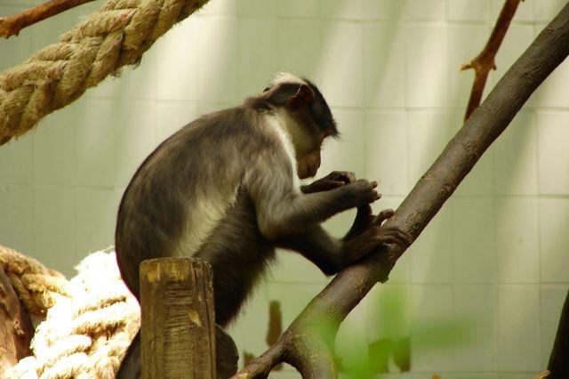 Zdjęcia: zoo, co tam mam?, HISZPANIA