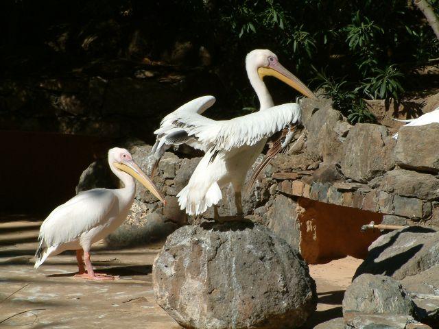 Zdjęcia: gran canaria, kanary1, HISZPANIA