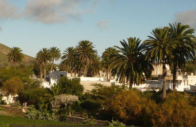 Zdjęcia: lanzarote, Lanzarote, palmowy gaj, HISZPANIA