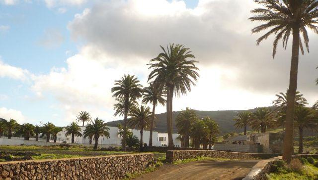 Zdjęcia: lanzarote, Lanzarote, palmowy gaj 2, HISZPANIA