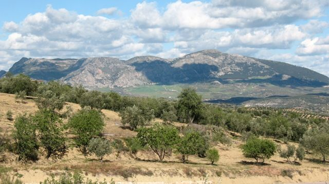 Zdjęcia: Alozaina, Andaluzja, gaje oliwne..., HISZPANIA