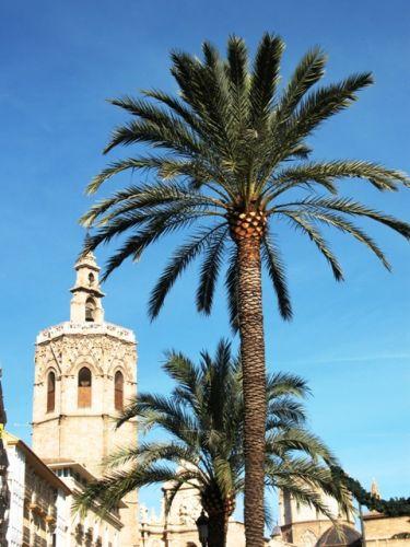 Zdjęcia: Valencia, Valencia, palma i wieza Miguelet, HISZPANIA