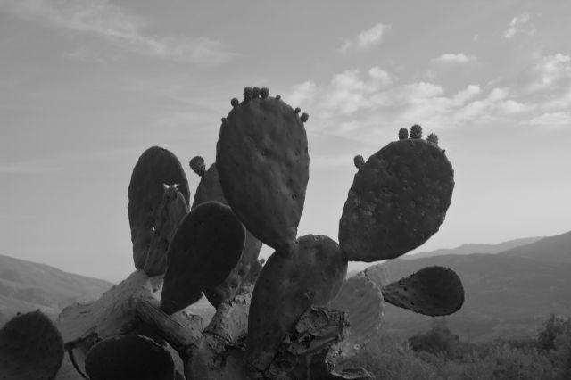 Zdjęcia: okolice lanjaron, andaluzja, kaktus, HISZPANIA