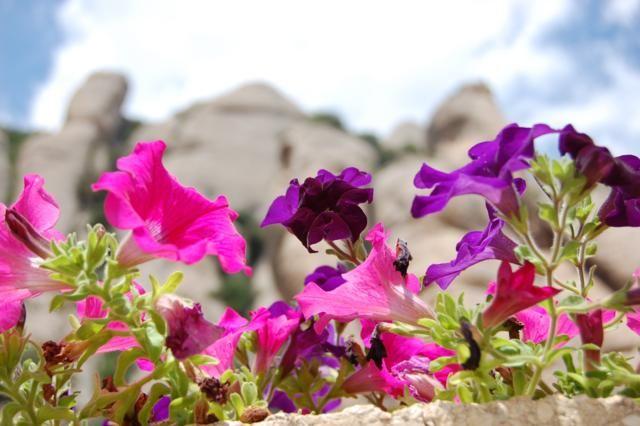 Zdjęcia: Barcelona, Barcelona, Kwiatki :), HISZPANIA