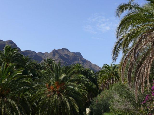 Zdjęcia: Gran Canaria, Wyspy Kanaryjskie, Palmy na tle gór, HISZPANIA