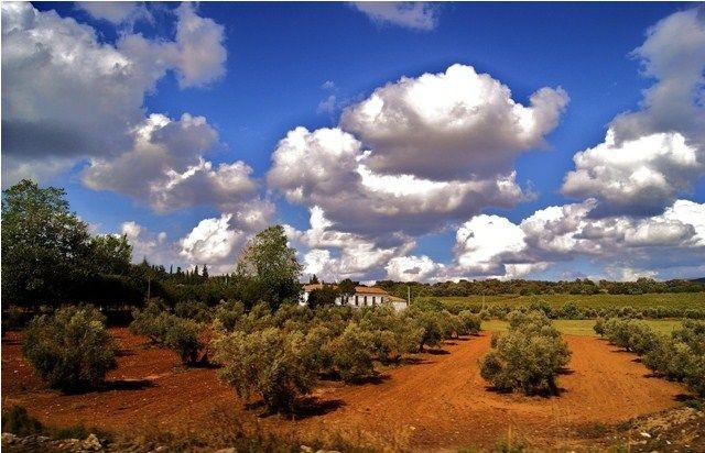 Zdjęcia: Pociągiem na trasie: Ronda-Malaga, Andaluzja, Krajobraz jak malowany, HISZPANIA