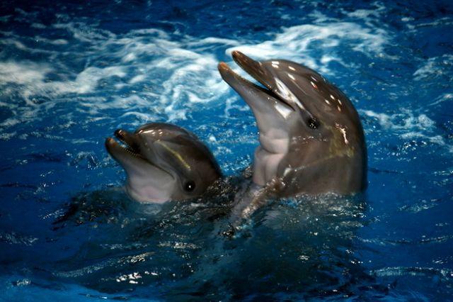 Zdjęcia: Barcelona, Katalonia, Delfiny, HISZPANIA