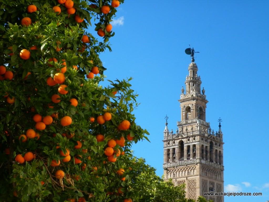 Zdjęcia: Sewilla, Andaluzja, Wiosna w krainie pomarańczy, HISZPANIA