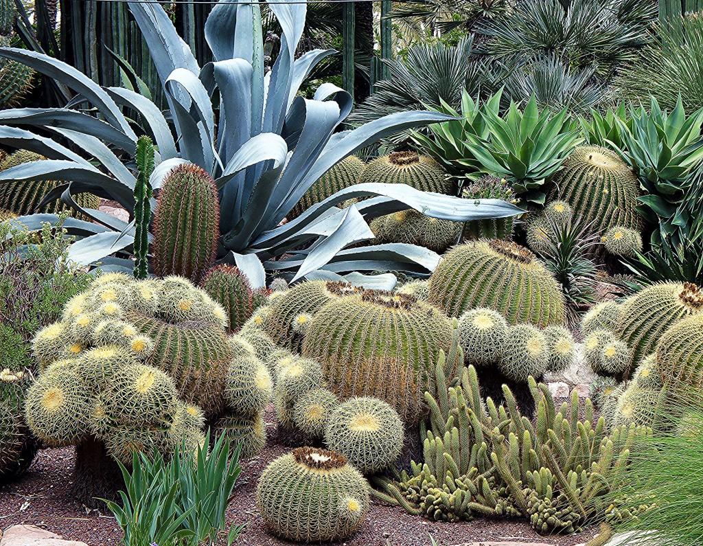 Zdjęcia: Elche, Alicante, Kaktusowa grządka, HISZPANIA