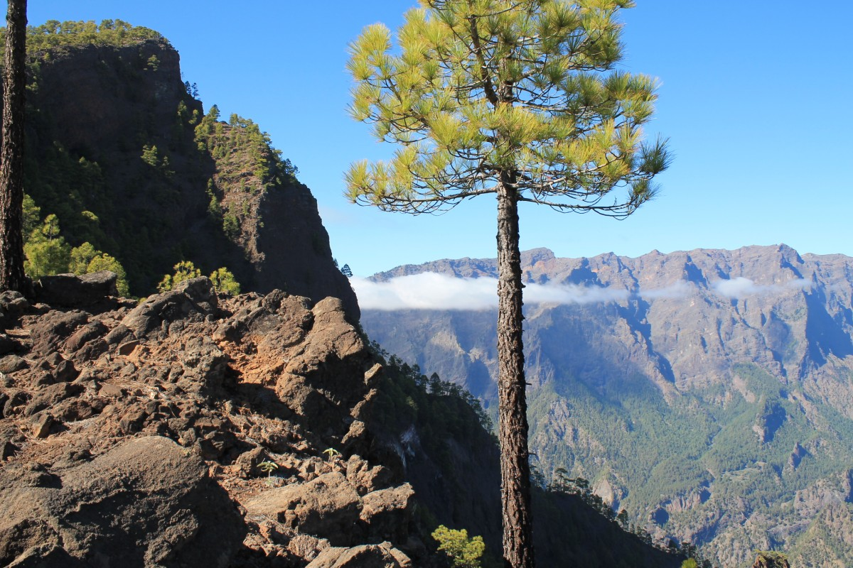 Zdjęcia: W drodze na Pico Bejenado, Wyspy Kan., La Palma, HISZPANIA