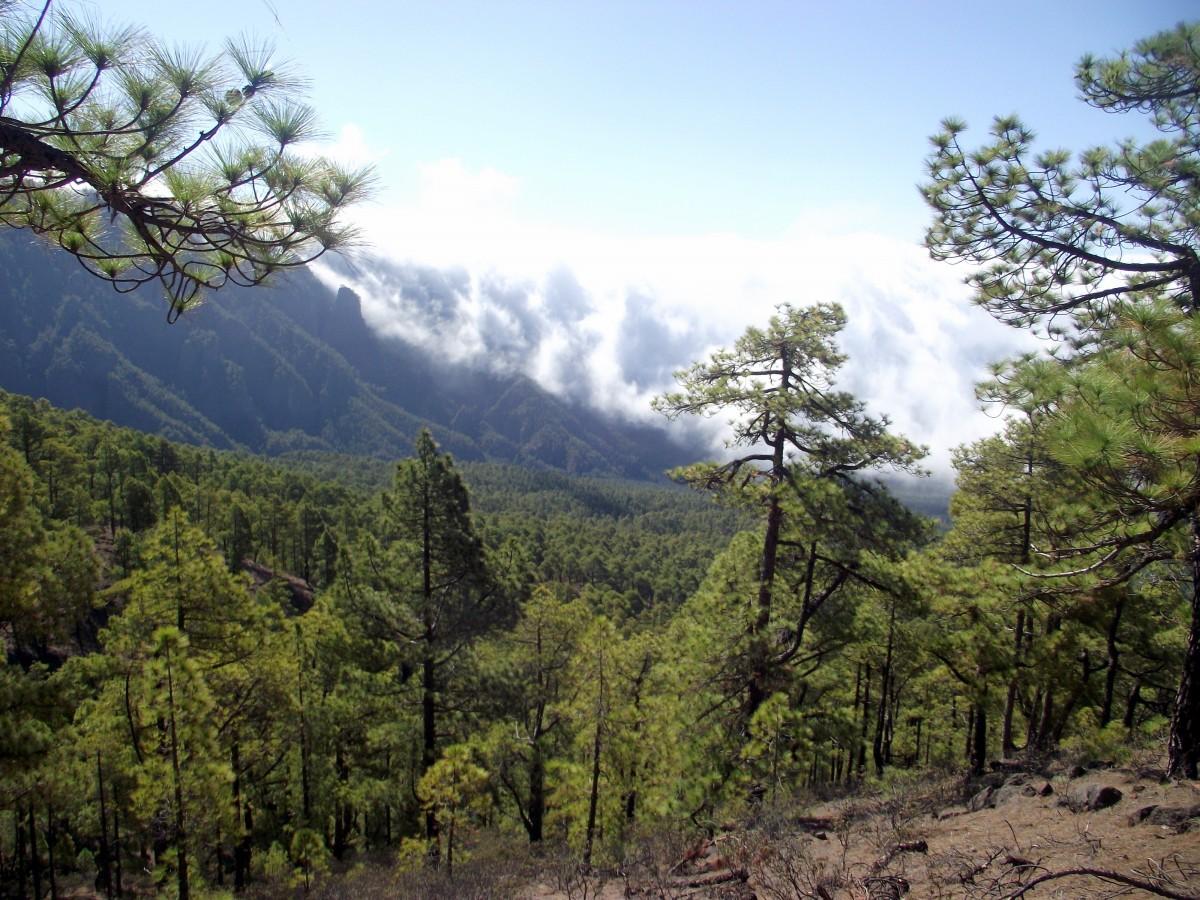 Zdjęcia: La Palma, Wyspy Kanaryjskie, Wodospad chmur, La Cumbrecita, HISZPANIA
