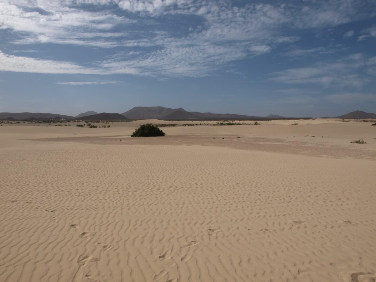 Zdjęcia: Corralejo, Fuertaventura ,  Dunas de Corralejo, HISZPANIA