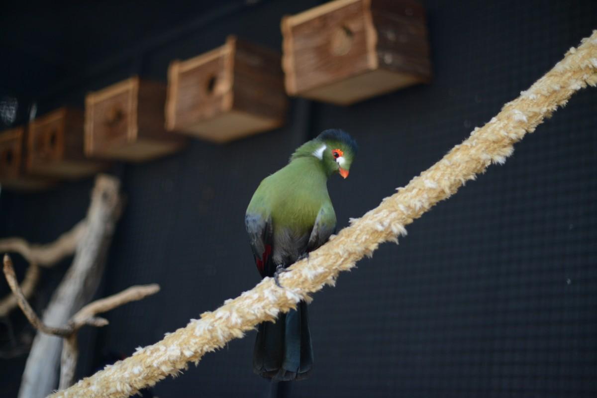 Zdjęcia: Majorka, Marineland Majorca (Calvia), Zielony ptaszek, HISZPANIA