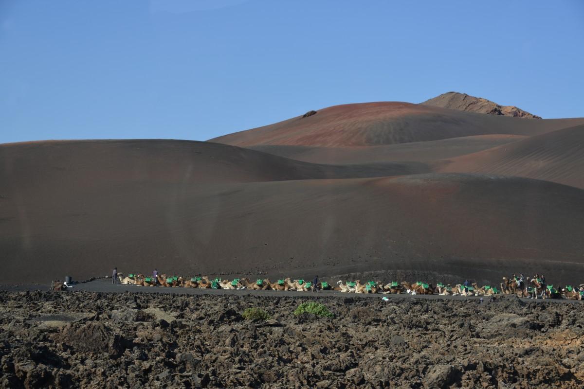 Zdjęcia: Lanzarote, Park Timanfaya, Karawana na wulkanie, HISZPANIA