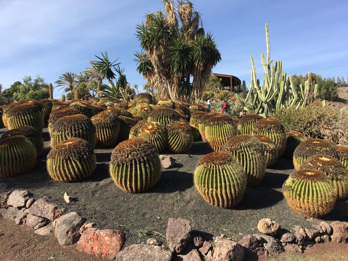 Zdjęcia: Fuerteventura, La Lajita, Ogród Kaktusów 2, HISZPANIA