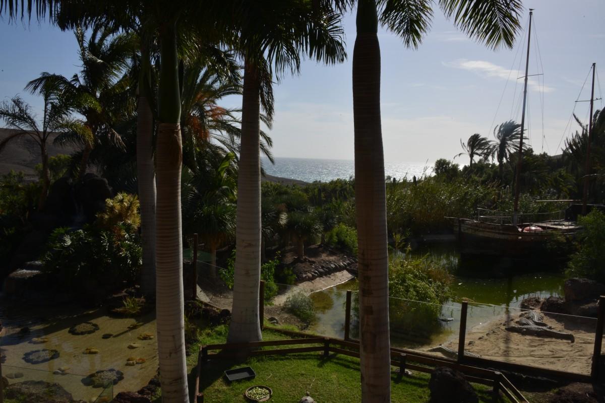 Zdjęcia: Fuerteventura, La Lajita Oasis Park, Teren parku, HISZPANIA