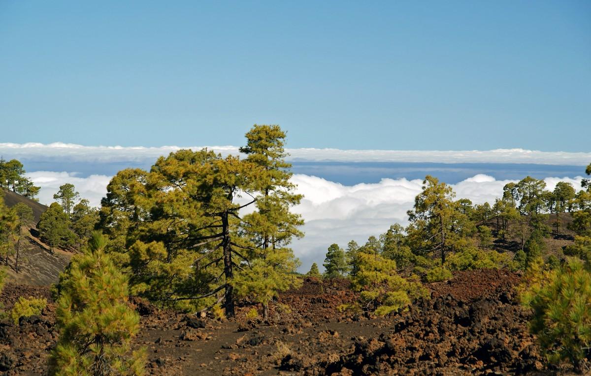 Zdjęcia: Teneryfa, Wyspy Kanaryjskie, Okolice Teide, HISZPANIA