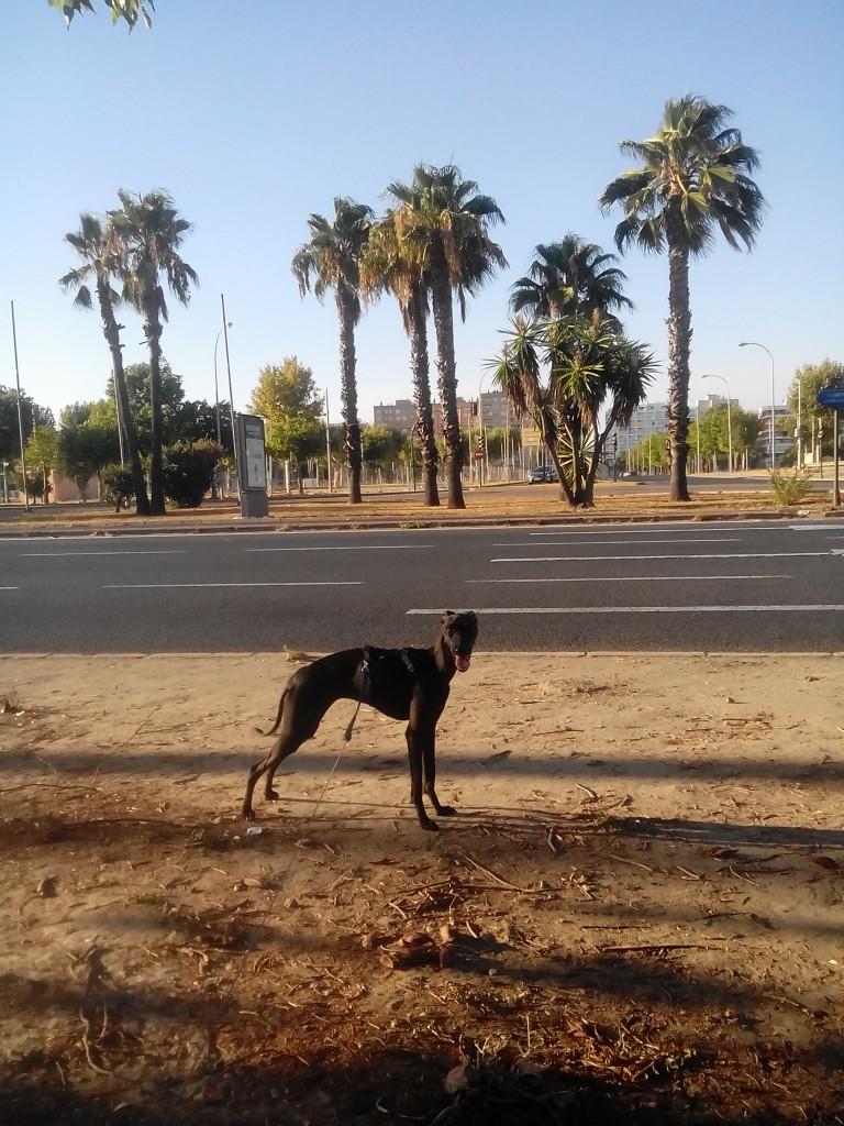 Zdjęcia: Sewilla, Andaluzia, Sewilla, HISZPANIA