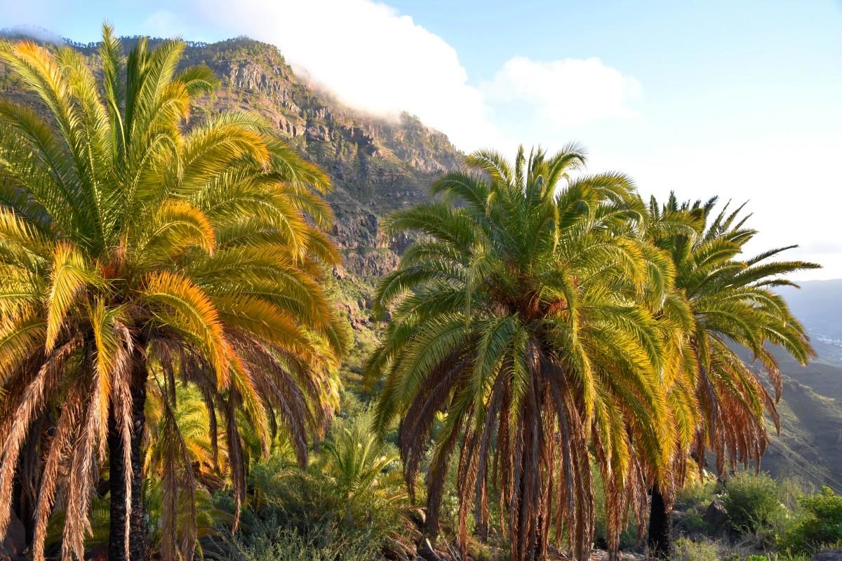 Zdjęcia: okolice Mogan, Gran Canaria, Wracając z gór, HISZPANIA