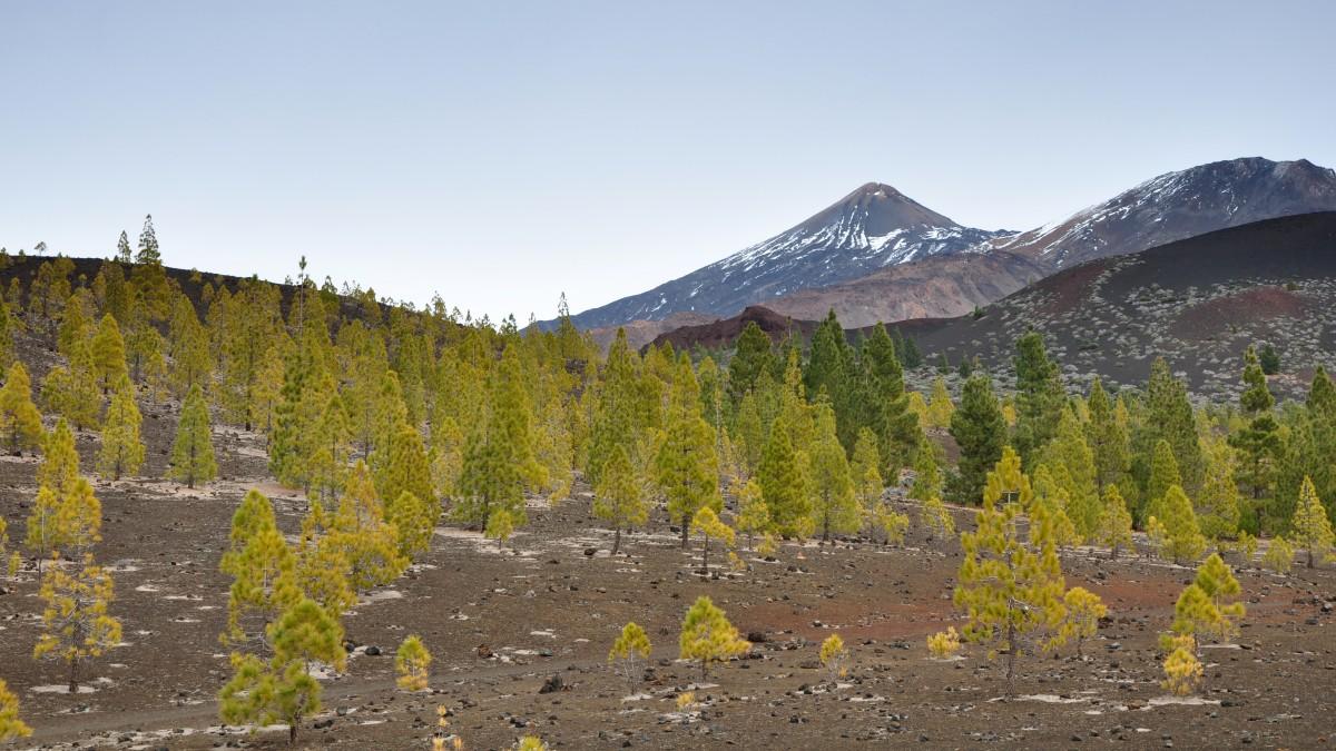 Zdjęcia: góry, Teneryfa, wulkaniczny las, HISZPANIA