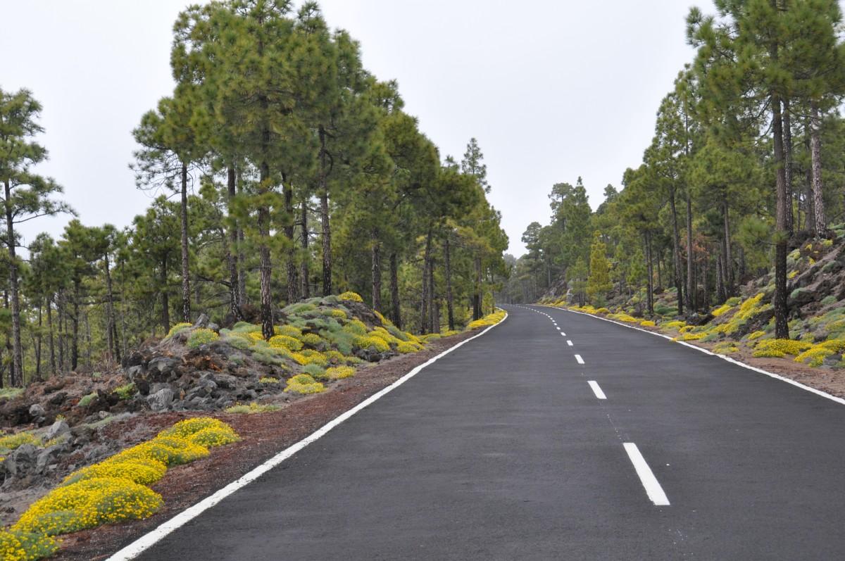 Zdjęcia: droga do wulkanu, Teneryfa, wiosenna droga, HISZPANIA