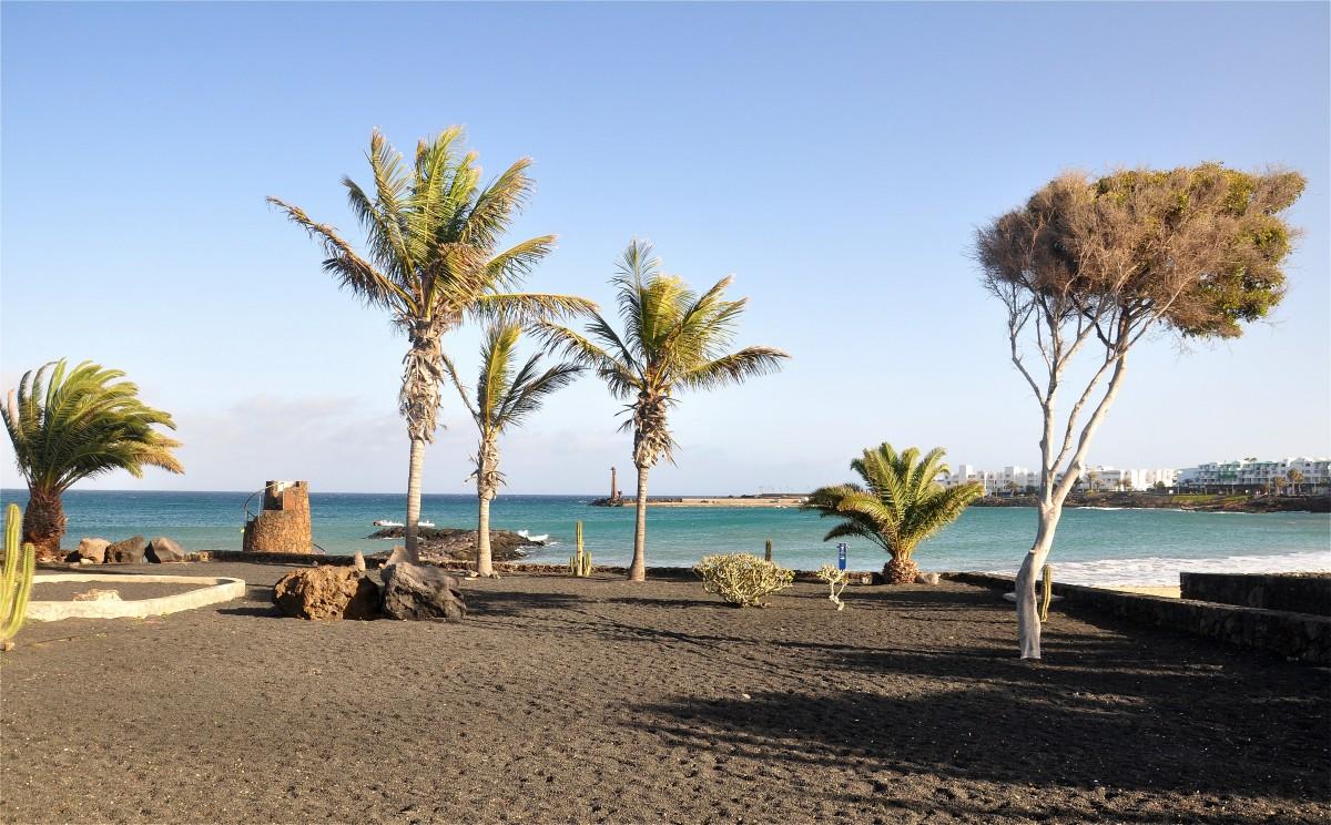 Zdjęcia: Lanzarote, Wyspy Kanaryjskie, Roślinność w Costa Teguise, HISZPANIA