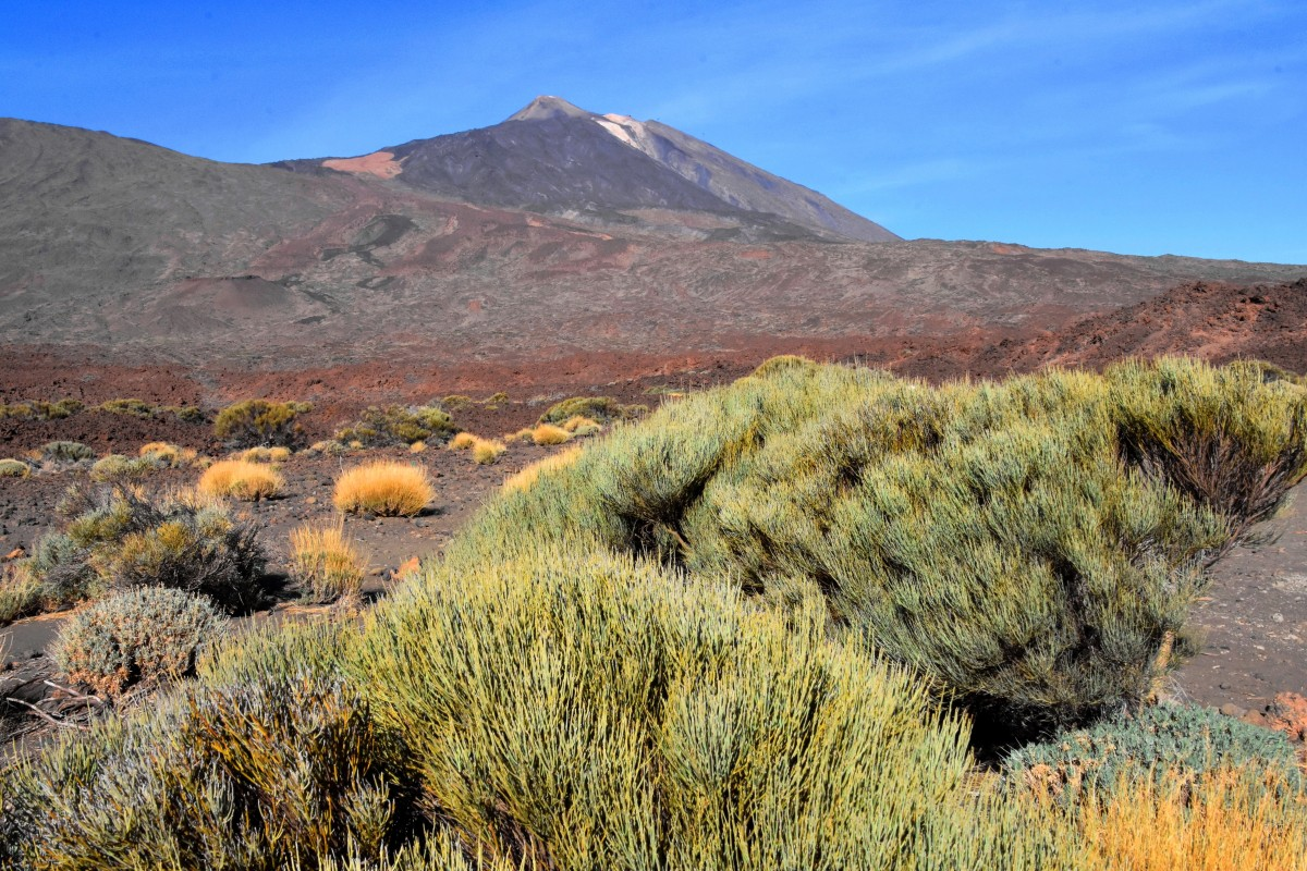 Zdjęcia: Park Narodowy Teide, Teneryfa, Widok na Pico del Teide, HISZPANIA