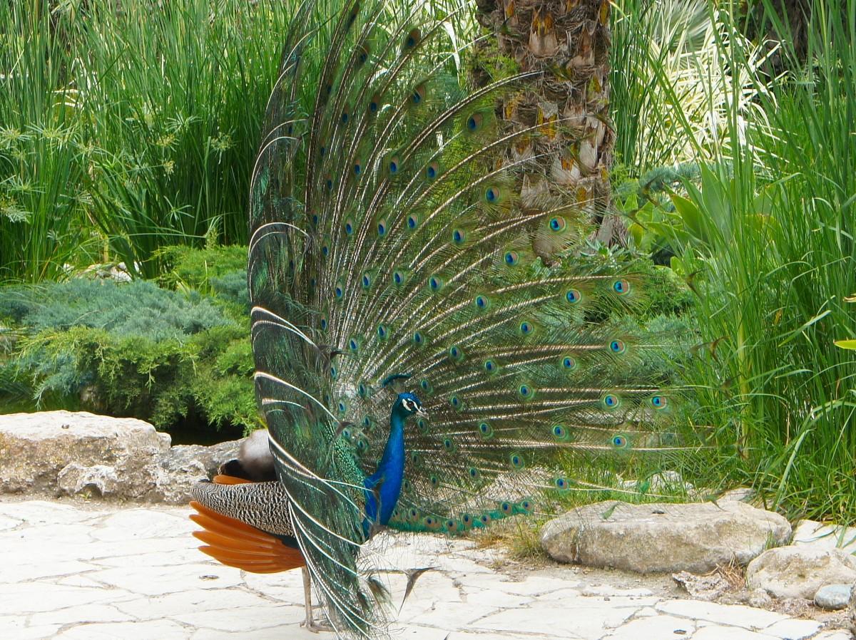 Zdjęcia: Elche,  Alicante, Dostojny spacer, HISZPANIA