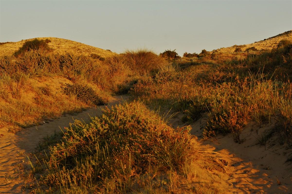 Zdjęcia: ., Alicante, Pozłacane wydmy, HISZPANIA
