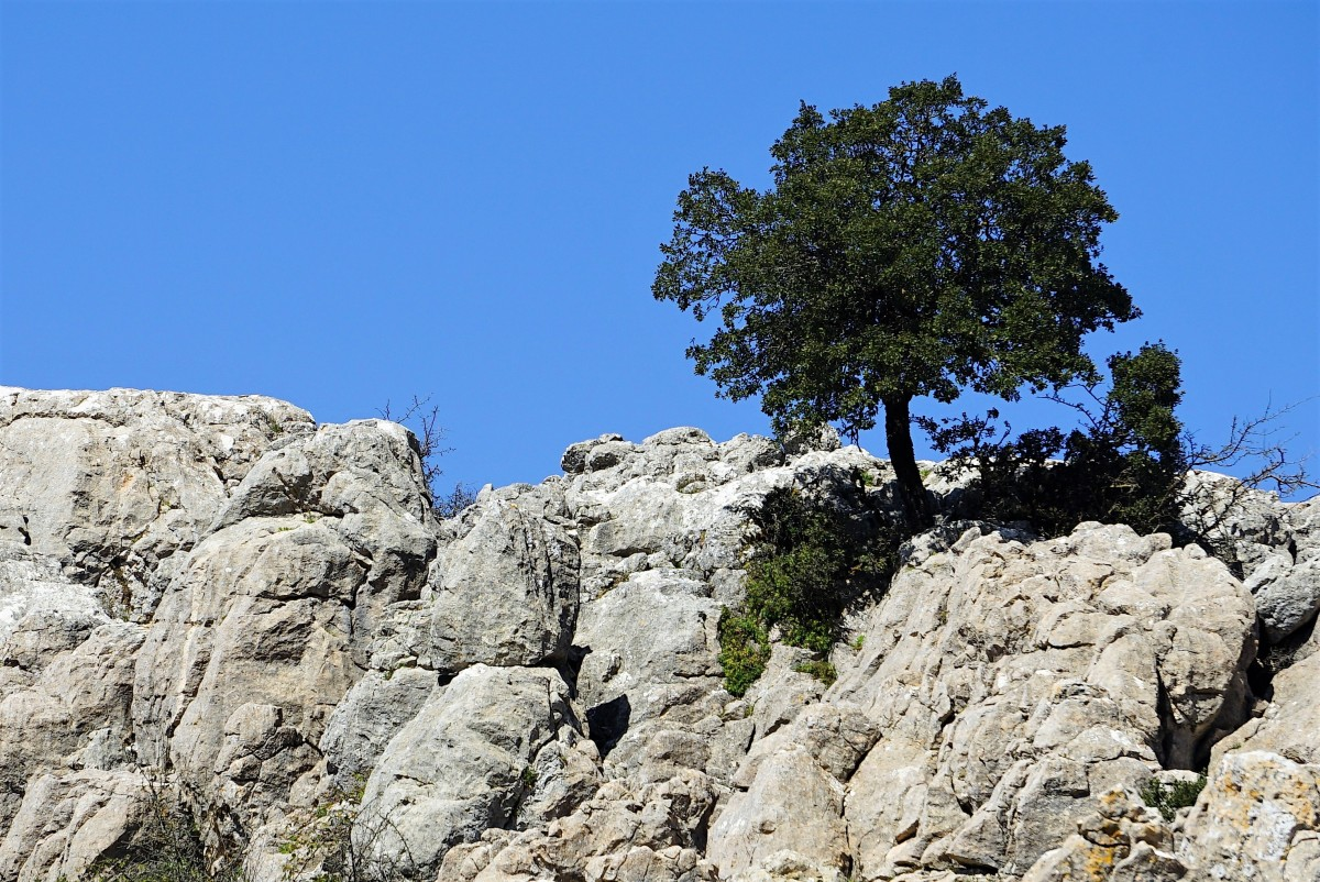 Zdjęcia: El Torcal de Antequera,  Andaluzja, Na kamieniu też urośnie, HISZPANIA