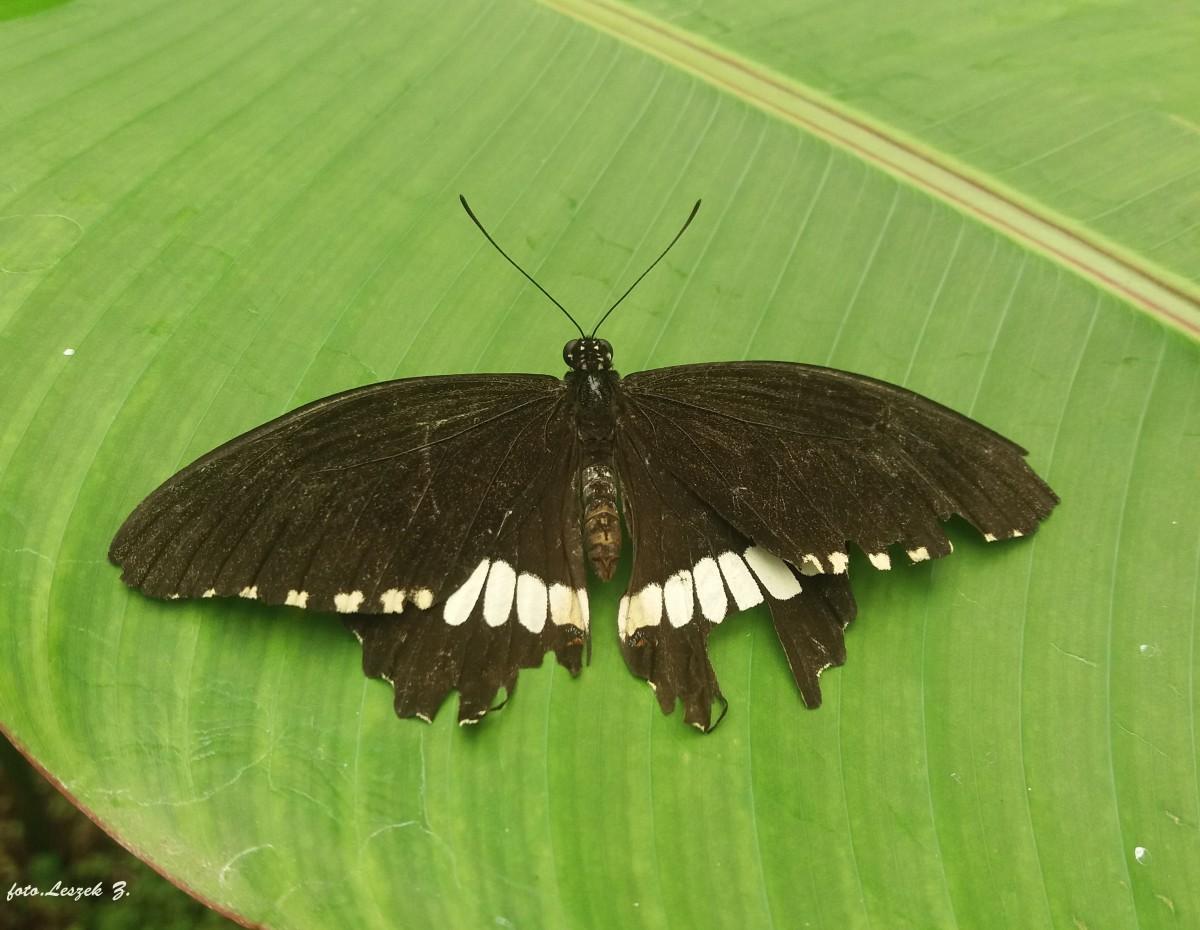 Zdjęcia: Costa del Sol., Andaluzja., Benalmadena - Butterfly Park., HISZPANIA