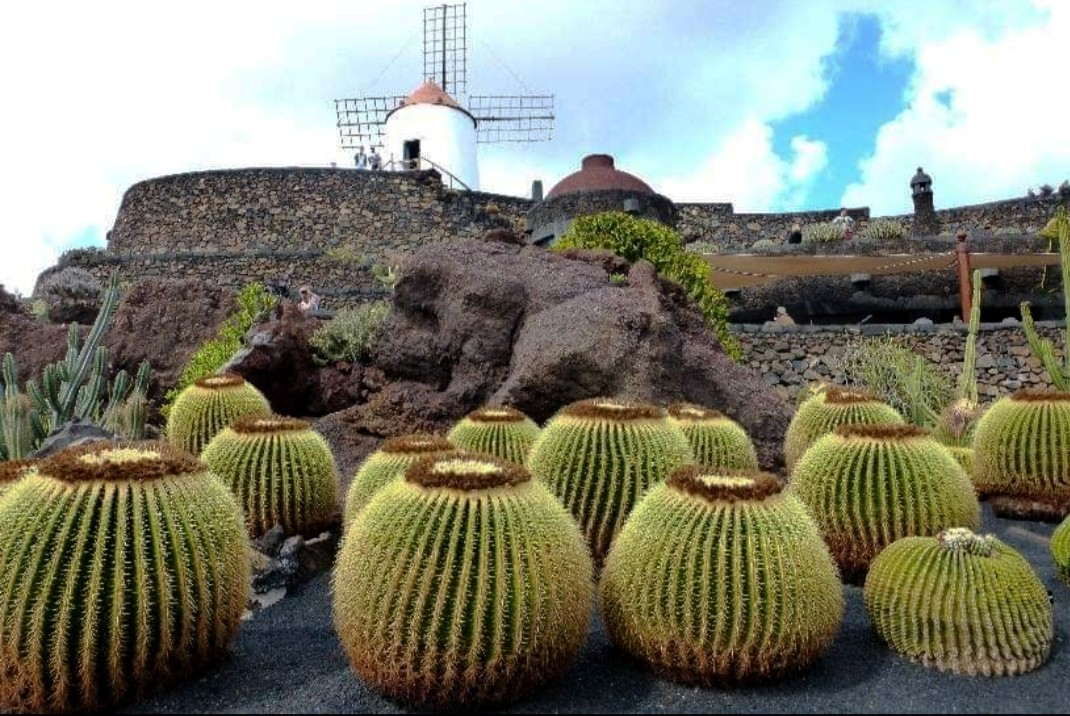Zdjęcia: Lanzarote, Lanzarote, Ogród, HISZPANIA