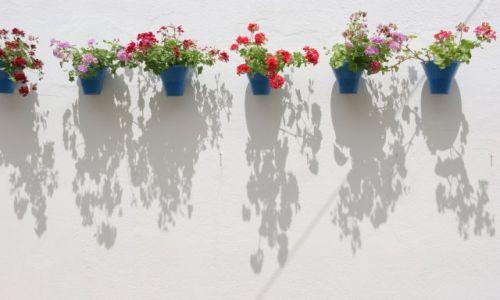 Zdjęcie HISZPANIA / Andaluzja / Kordoba / ... kwiaty Kordoby...